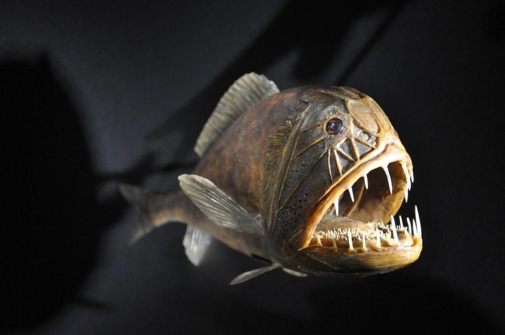 Bizarre Sea Creatures