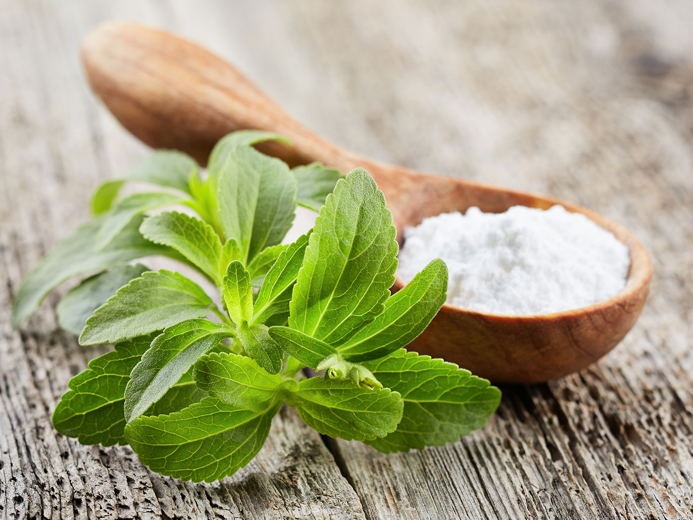 Stevia benefits and properties
